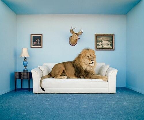 lion sofa